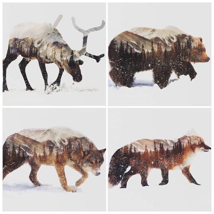 """Andreas Lie er en fantastisk dyktig visuell kunstner! Den briljante bruken av digital dobbelteksponering gir ett unikt og stilig uttrykk! ✨ Nå har @artworkbylie sluppet en """"Arctic"""" kolleksjon og vi har alle de 9 bildene på lager! Her ser dere ett lite utvalg  Resten finner dere på www.nordiskehjem.no #nordiskehjem #artworkbylie #andreaslie #arcticseries #art #dobbeleksponering #webshop"""