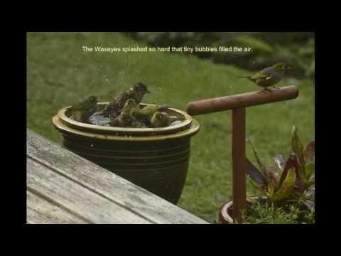 Birdie Bathtime Fun