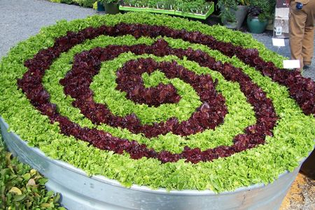 spiral lettuce: Spiral Lettuce, Garden Ideas, Spirals, Lettuce Spiral, Gardening Ideas, Green, Outdoor, Gardens, Vegetable Garden