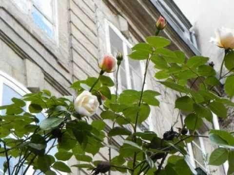 The Rose Poem en_0001.wmv - YouTube