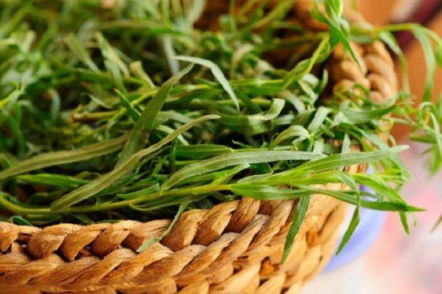 Mide İçin Tarhun    Tarhun Fransız mutfağında sıklıkla kullanılan bir bitkidir. Hoş bir kokusu vardır ve tatlıdır.    Antioksidan ve antibakteriyeldir.    Magnezyum, kalsiyum, demir, fosfor ve potasyum içerir.