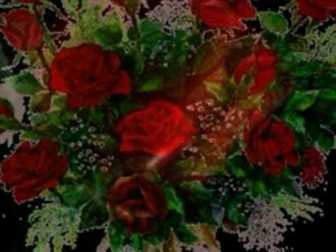 Róża czerwona jak aksamit Damian Holecki