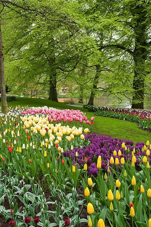 This is absolutely beautiful!! Tulips are my favorite flowers!   Keukenhof Gardens, Amsterdam, Netherlands