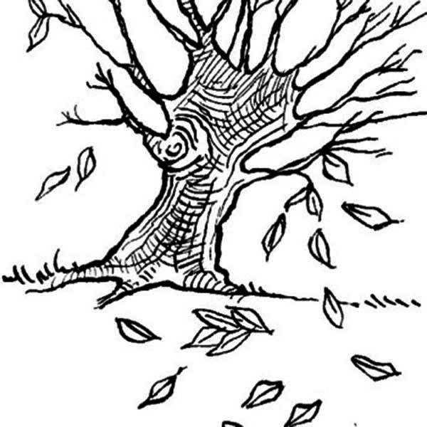 8 Pics Of Dogwood Leaf Coloring Page