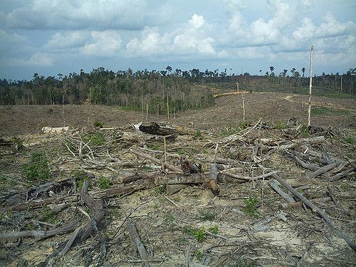 Sebutkan 5 Akibat Penggundulan Hutan?