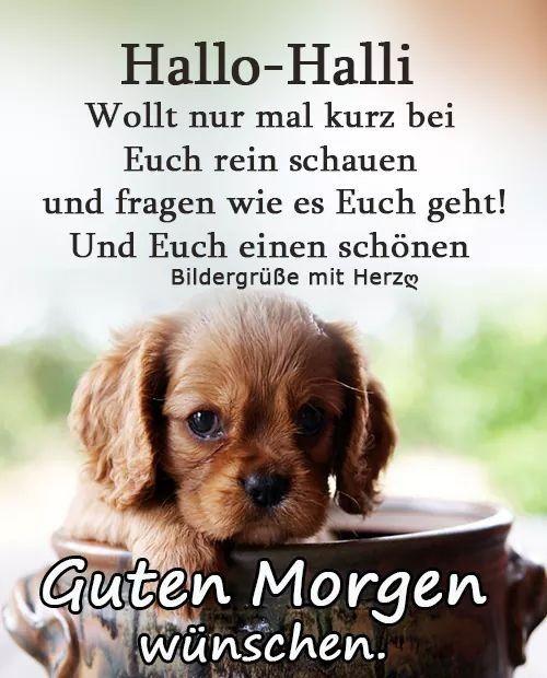 Pin Von Grauer Wolf Auf Guten Morgen Guten Morgen Gruss Guten Morgen Lustig Guten Morgen Wunsche