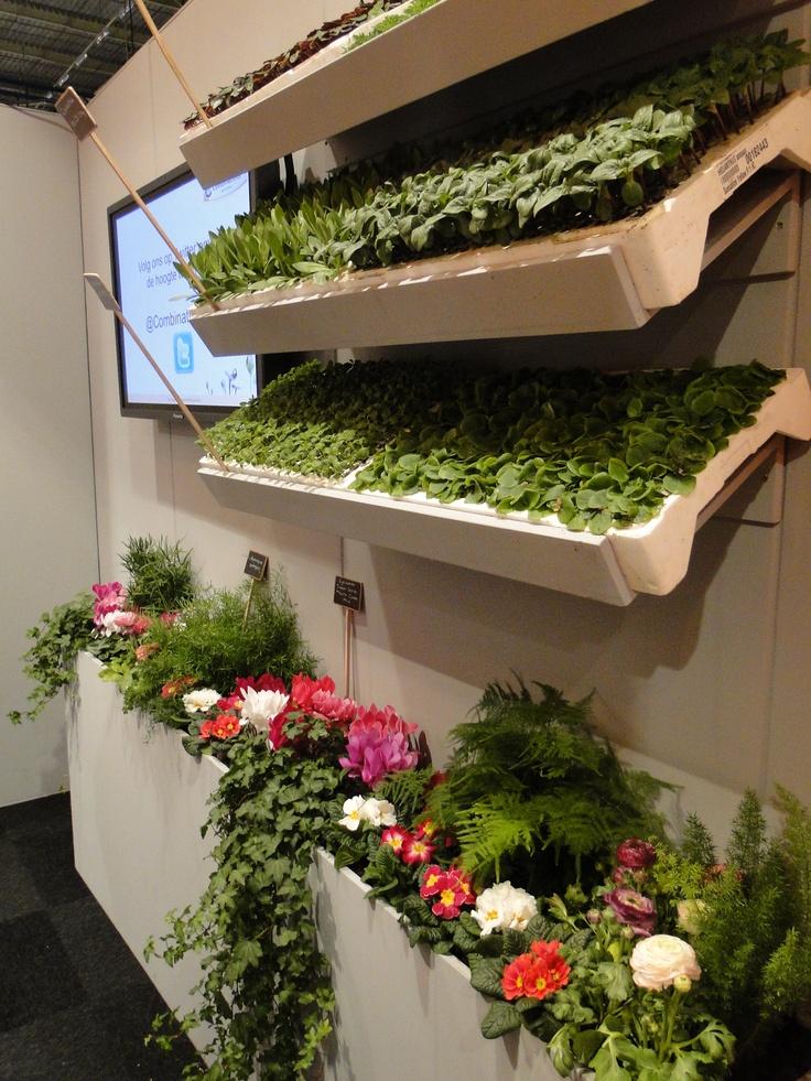 Flower Trials bij Combinations juni 2012