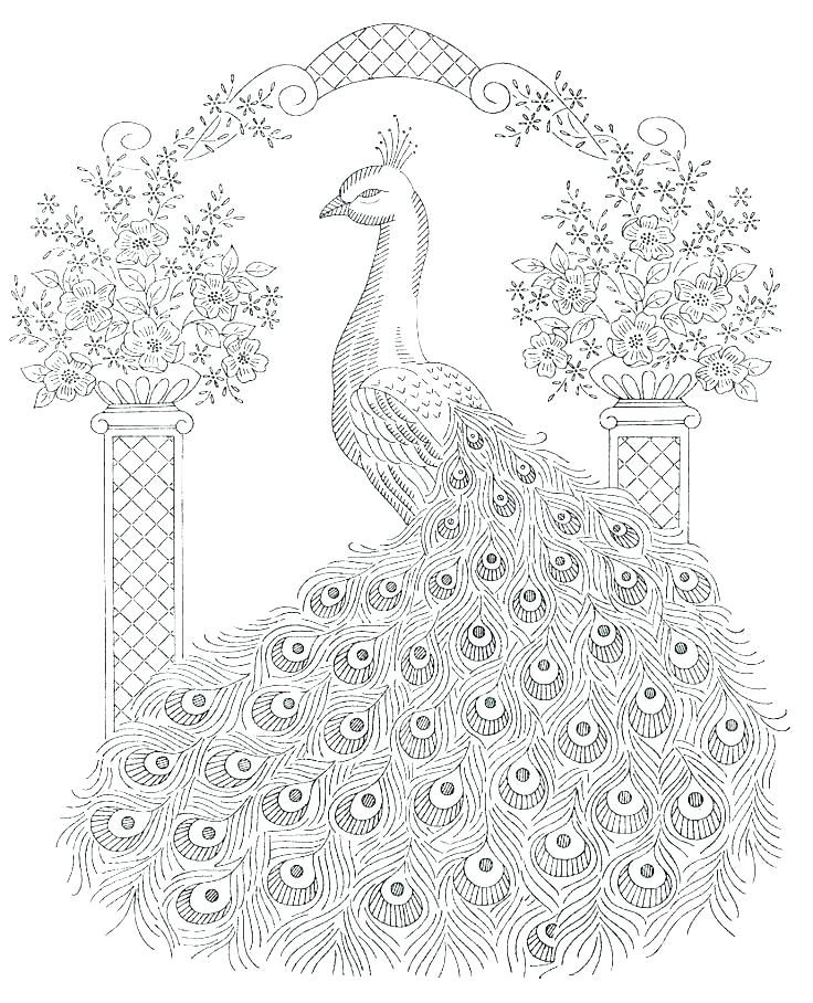 Free Printable Peacock Coloring Pages For Kids Peacock Coloring Pages Animal Coloring Pages Embroidery Patterns Vintage