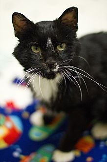 I am wise and sweet, and pretty much love everyone. I am always ready to greet and welcome any new kitty that joins us. I lived with another cat and did great with her. I am also so gentle that I would do well with kids too. When people visit with me, I head-butt them, …