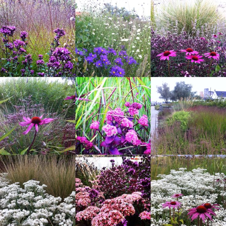 The 551 Best Images About Plant Combinations On Pinterest