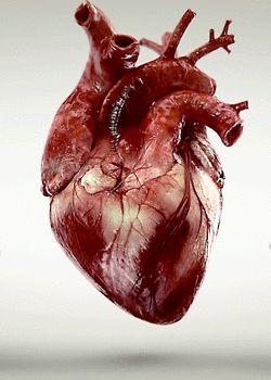 O Coração | IdeaFixa