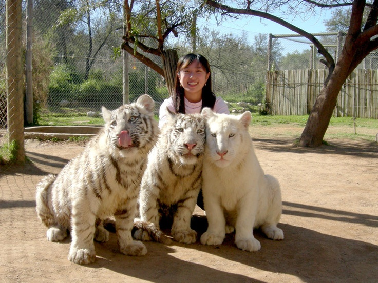 Cango Wildlife Ranch in South Africa - Animal encounters for ages 8+; Volunteer opportunities for age 18+