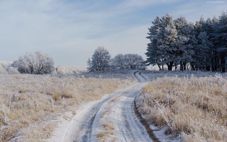 Zima, Droga, Oszronione, Pola, Drzewa