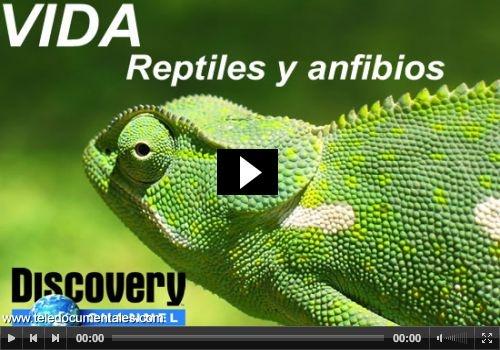 DOCUMENTAL: reptiles y anfibios