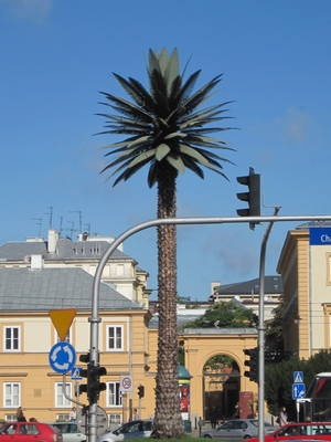 Palm Tree in Warsaw