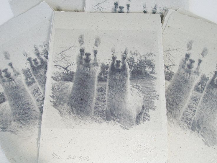 Llama Poo Paper Print, Limited Edition Print, Llamas,  Animals Print,  Best…