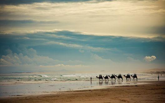 Обои Караван верблюдов идет к морю