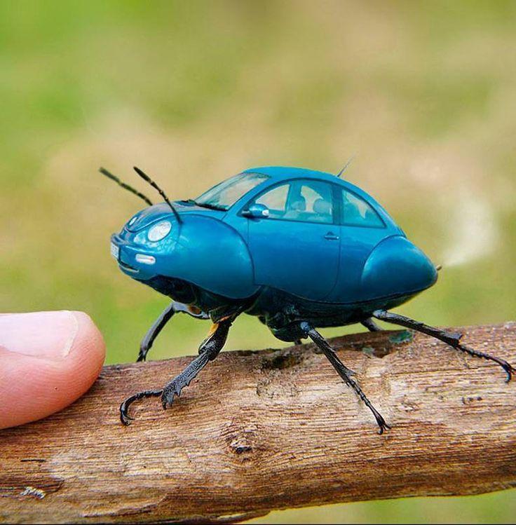pin  jordan ward  bevs work insect  photo manipulation beetle volkswagen  beetle