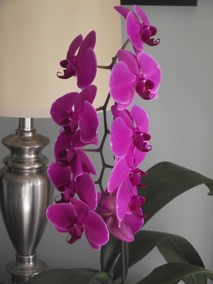 No. 9 Jan 2012 bloom #orchids