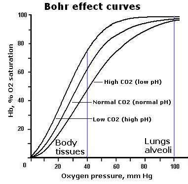 Bohr effect curves.