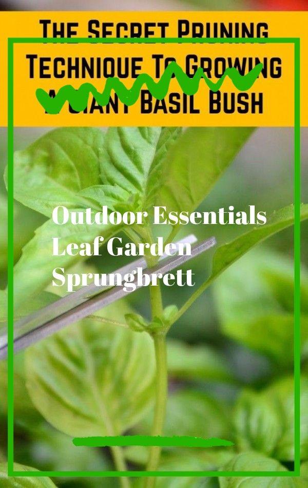 Erstellen Sie Einen Mehrjahrigen Garten Der Zu Jeder Jahreszeit Schon Aussieht Ohne Ausgefallene Plane Oder Ei In 2020 Basil Plant Pruning Basil Garden Planter Boxes