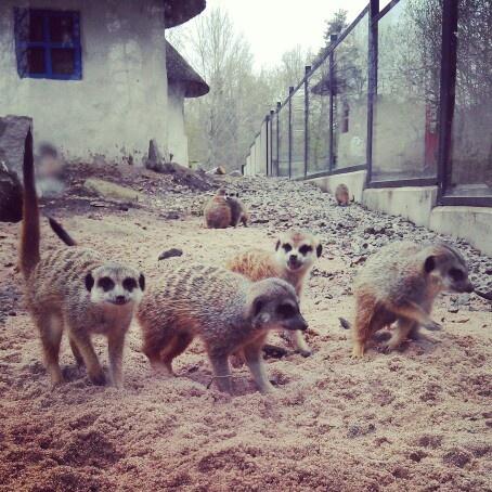 Parken zoo- Eskilstuna