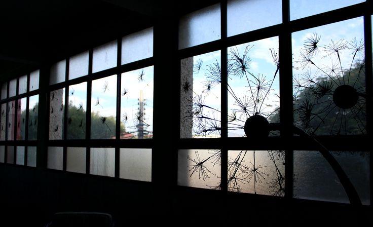 Detalle de flor de diente de león esparcidas por las ventanas.