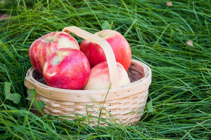 Honeycrisp : With a sweet yet slightly tart flavor, this variety of apple is great for salads, baking, cooking or eating as a snack.