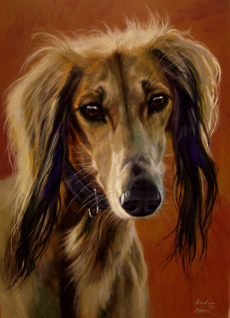 my dog, saluki- Artis