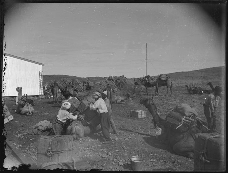 013669PD: Loading camels, Marble Bar, 1911 http://encore.slwa.wa.gov.au/iii/encore/record/C__Rb4302918?lang=eng