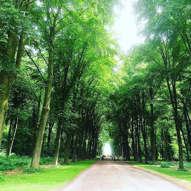 【kanana0525】さんのInstagramをピンしています。 《ヨーロッパの森はなんだか壮大です。  #鳥の声がこれまた爽やか #人がゴミのようだ #ムスカ大佐  #ドイツ生活#ドイツ暮らし#海外生活#海外暮らし#deutschland #germany #düsseldorf #森林浴#森#自然#forest》