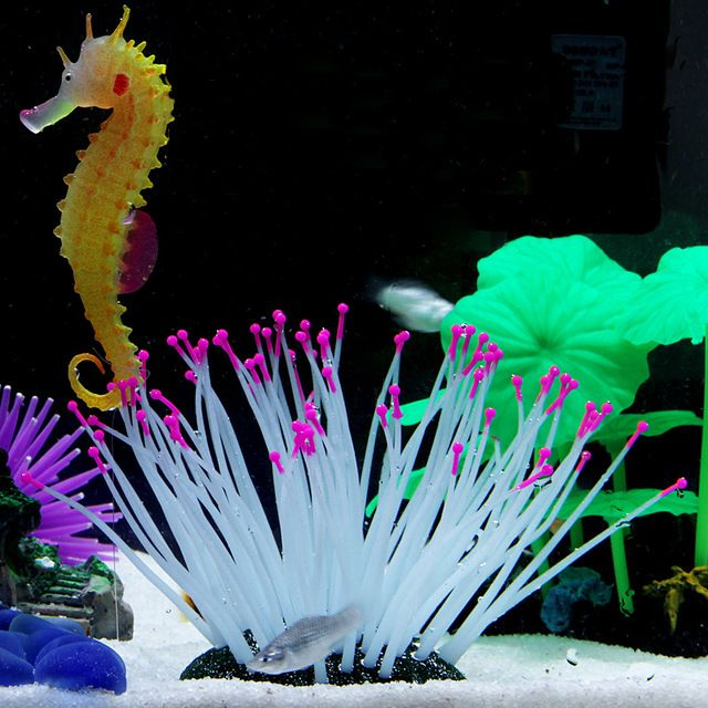 17 best images about cool ideas on pinterest weekly for Fish tank smells