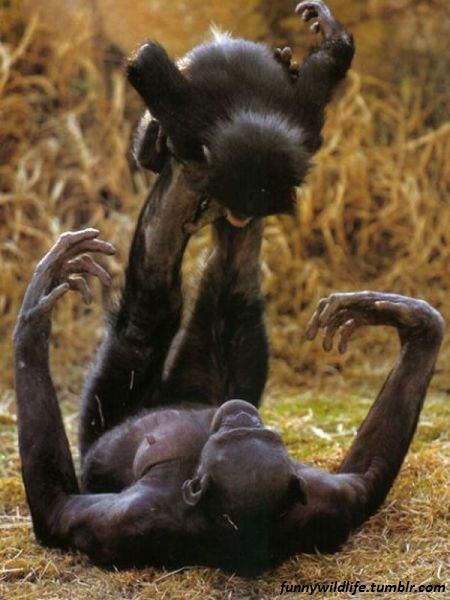 Yippie!!! And we think we invented that for our children!: Monkeys Playing, Animals, Mother, Nature, Bonobo Monkey, Baby, Primates, Playing Airplane, Kid