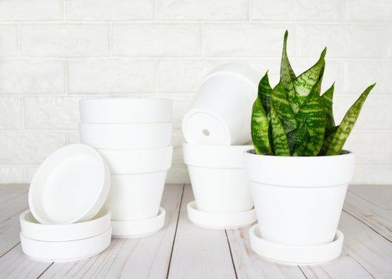 6 Pack 4 Small Terra Cotta Pots W Saucers Clay Pot White Ceramic Pottery Planters Cactus Succulent Flower Pot Matte White Bisque Clay Pots Terracotta Pots Ceramic Pottery