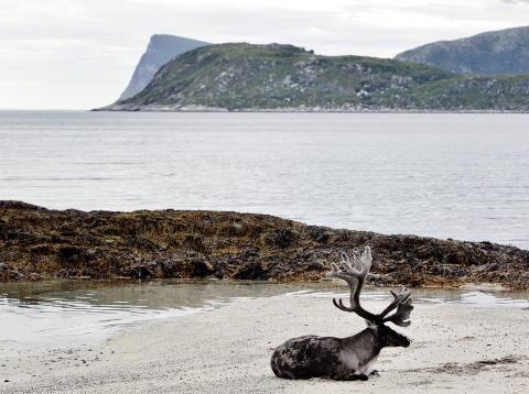 Hammerfest, Norway    Photo: Henning Lillegård