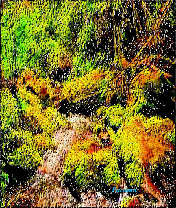 Moss - Lucamo: Creating with images