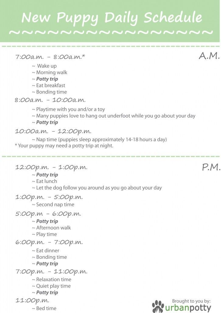 New Puppy Daily Schedule Puppy Training Schedule Potty Training