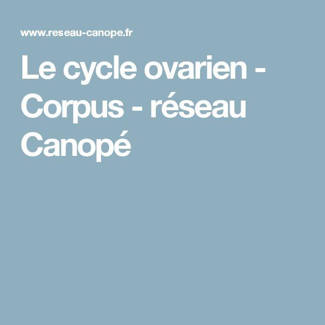 Le cycle ovarien - Corpus - réseau Canopé