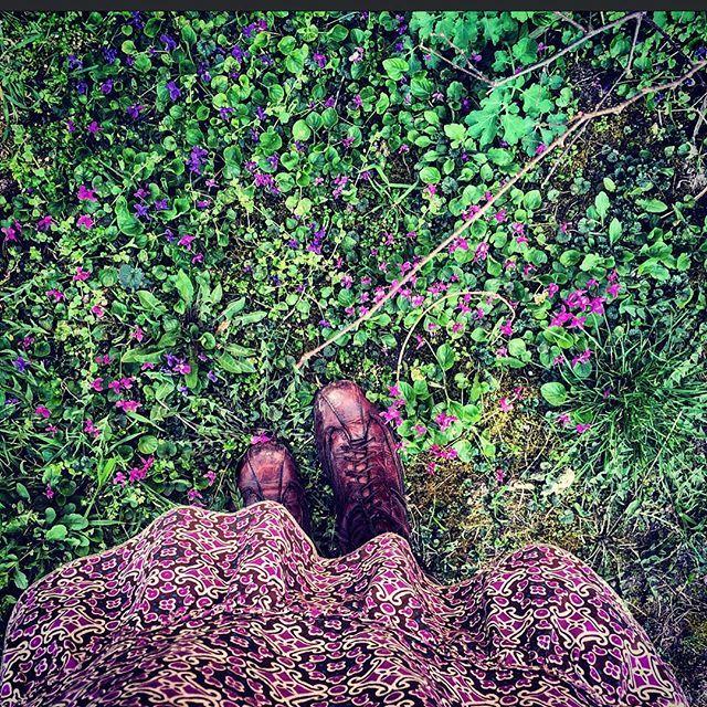 #spring #springtime #flowers #flowerslovers #violet #colorful #outdoors #nature #mik #ikozosseg #instagood #instagram #instalike #instadaily #ibolya #virág #field #flowerfield