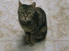 1000 id es sur le th me pipi de chat sur pinterest urine - Enlever odeur urine de chat sur canape ...