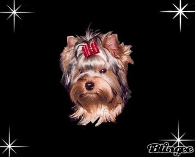 Best Food For Yorkie Puppies Uk