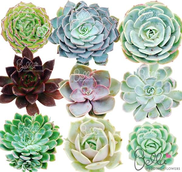 Freshly cut succulent flowers have attractively colored fleshy 'petals'. Our mixed package contains an assortment of our different succulent flower types.  Free Shipping! $79