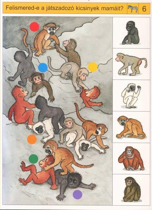 Tel hoeveel apen er van iedere soort zijn, free printable