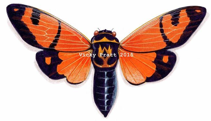 By Vicky Pratt. Gaeana Festiva Orange Cicada. Entomology, insects. Copic markers and coloured pencil. Find me on Facebook. www.vicpratt.wix.com/vickypratt