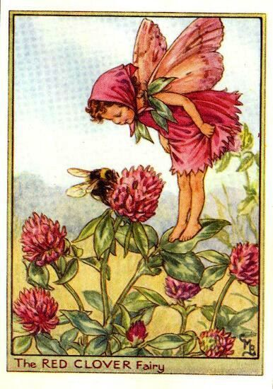 red-clover-flower-fairy-print-cicely-mary-barker  $40