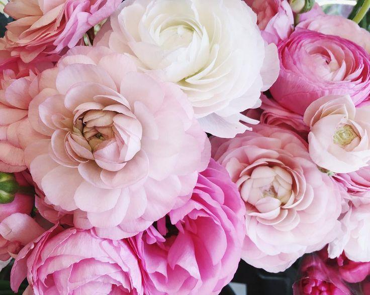 393 best Real Flowers Pattern images on Pinterest | Flowers garden ...