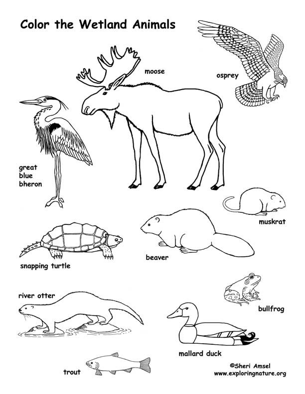 Wetland Animals Coloring Page Animal Coloring Pages Wetlands Activities Wetland