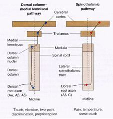 spinothalamic tract and dorsal column pathway - Google Search