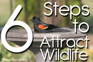 Welcome to my free series on Attracting Wildlife To Your Garden.  Check it out, complete the easy to follow steps I outline and give yourself the best chance of attracting wildlife into your yard.