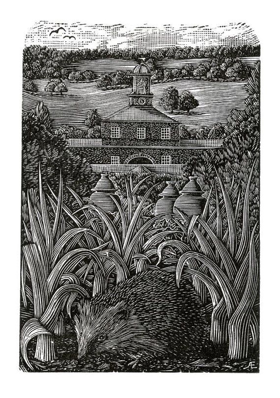 Andy English. A Chatsworth Hedgehog. (wood engraving).